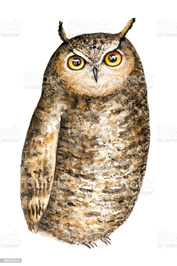 Cute Brown Great Horned Owl With Big Round Yellow Eyes Watercolor ...