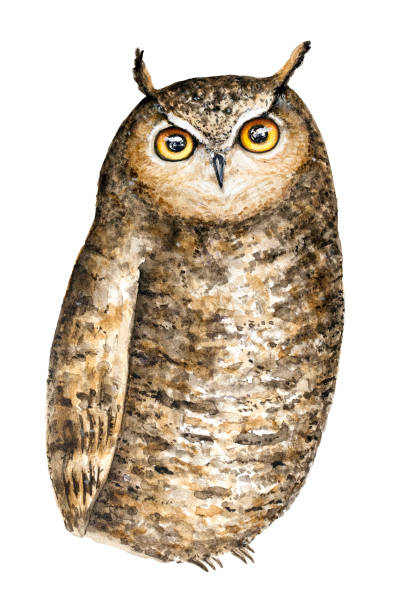 cute brown great horned owl (bubo virginianus) with big round yellow eyes watercolor portrait illustration. isolated on white background. - great horned owl stock illustrations, clip art, cartoons, & icons