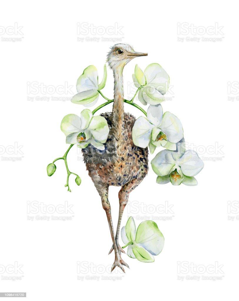 Sevimli Cizgi Suluboya Devekusu Ile Beyaz Orkide Deve Kusu Ve