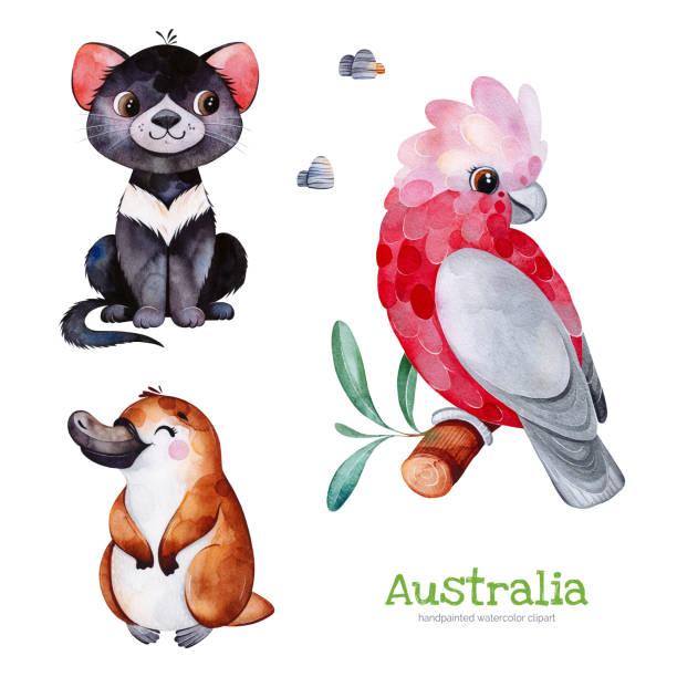 bildbanksillustrationer, clip art samt tecknat material och ikoner med söt samling med tasmanska djävulen, platypus, kakadua, stenar. - platypus
