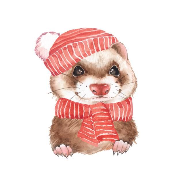 Cute ferret in red hat Cute ferret in hat. Watercolor illustration ermine stock illustrations