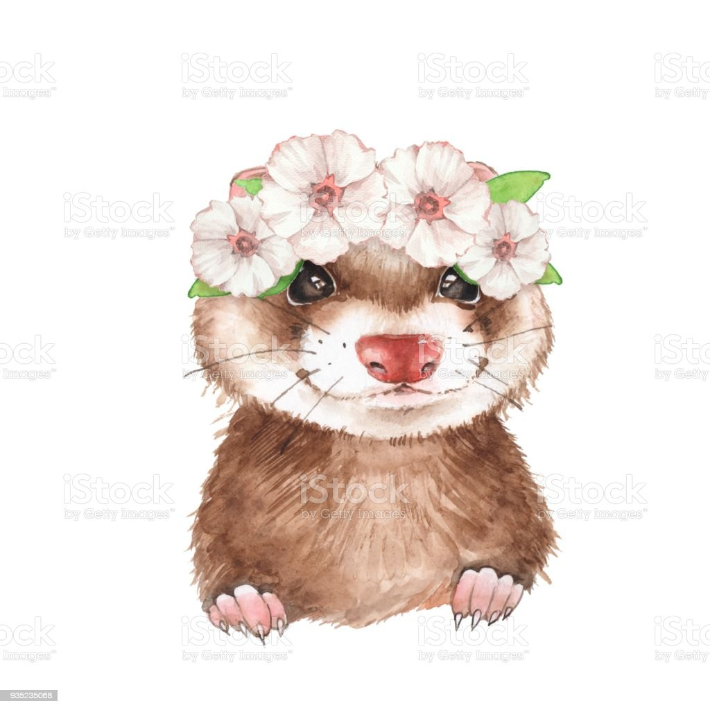 Cute Ferret In Wreath Stock Vector Art More Images Of Animal