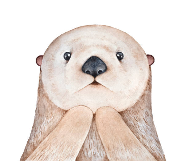 cute fluffy little sea otter (enhydra lutris) character. looking at camera, astonished facial expression. symbol of playfulness and family. handdrawn water color graphic illustration, cutout element. - baby animals stock illustrations