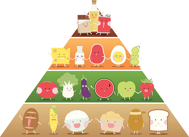 Best Food Pyramid Illustrations, Royalty-Free Vector