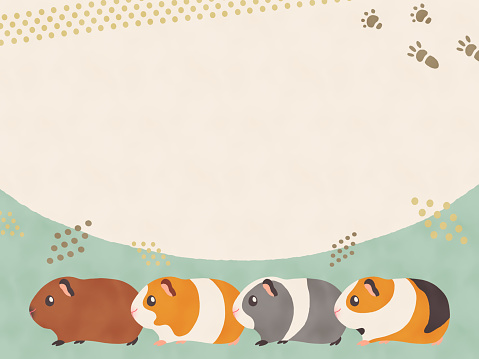 Cute frame of guinea pigs with various coat colors Horizontal position