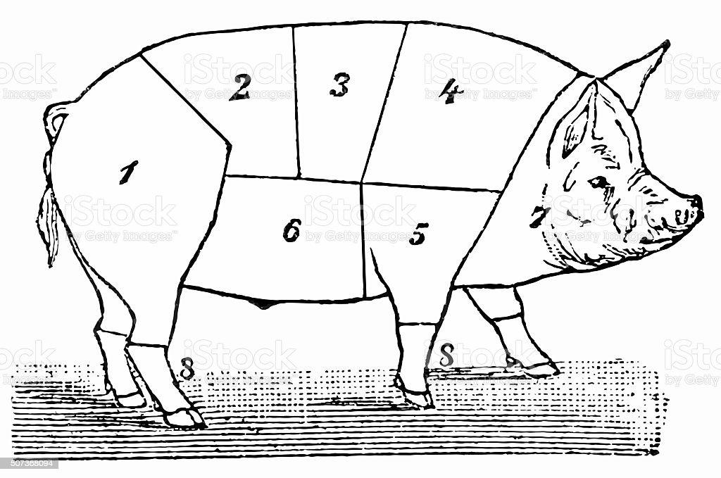 royalty free pig diagram clip art  vector images