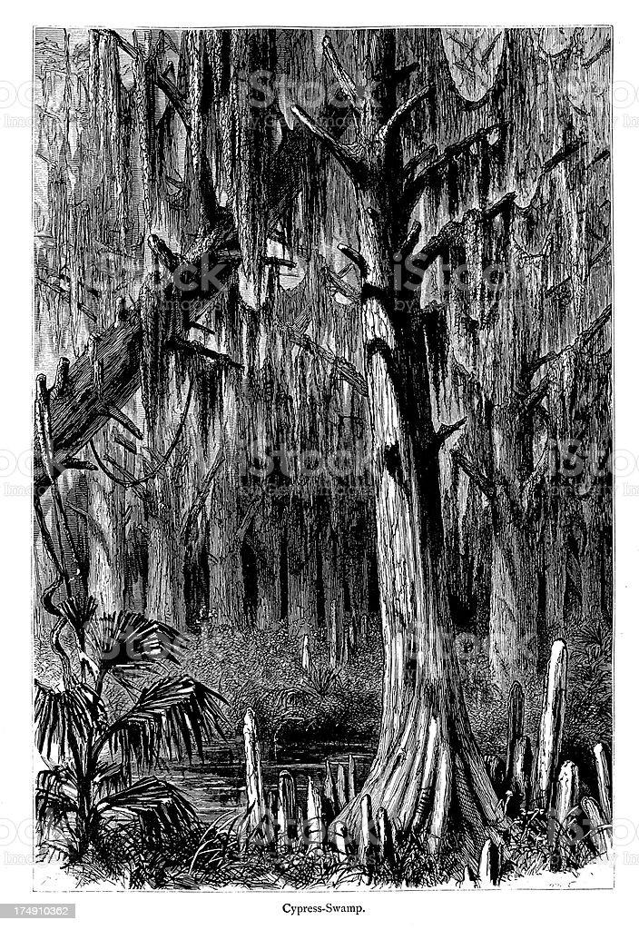 Cypress Swamp, Mississippi River, USA vector art illustration