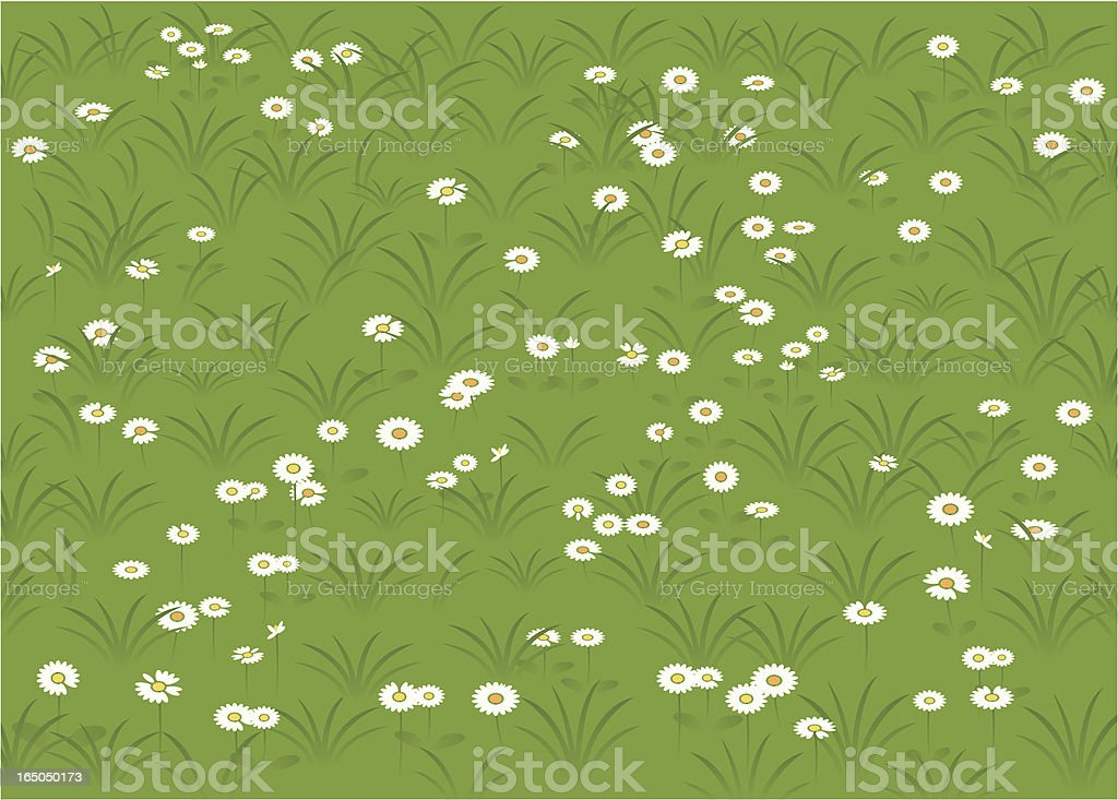 Daisies in the lawn royalty-free stock vector art