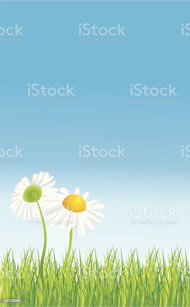 daisy and sky royalty-free daisy and sky stock vector art & more images of beauty in nature