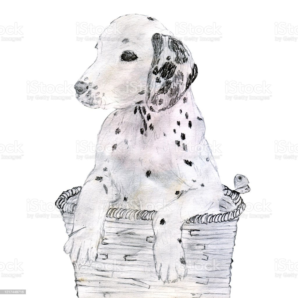 Dalmatian Puppy Sitting In A Basket Stock Illustration Download Image Now Istock