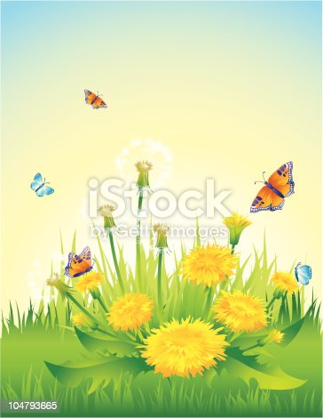 istock Dandelions 104793665