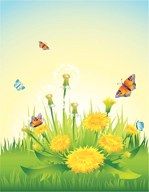 Dandelions  tranquil scene stock illustrations