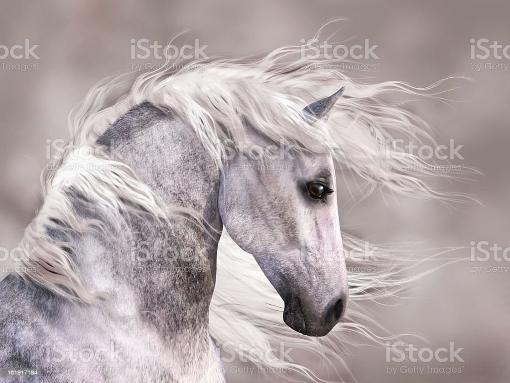 Dappled Grey Horse Head Profile vector art illustration