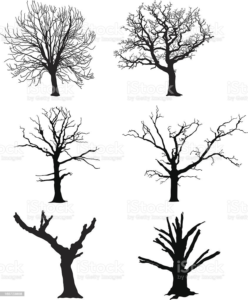 Vector Illustration Tree: Dead Tree Stock Vector Art & More Images Of Autumn