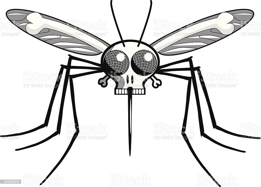 Deaths Head Mosquito : Istockphoto