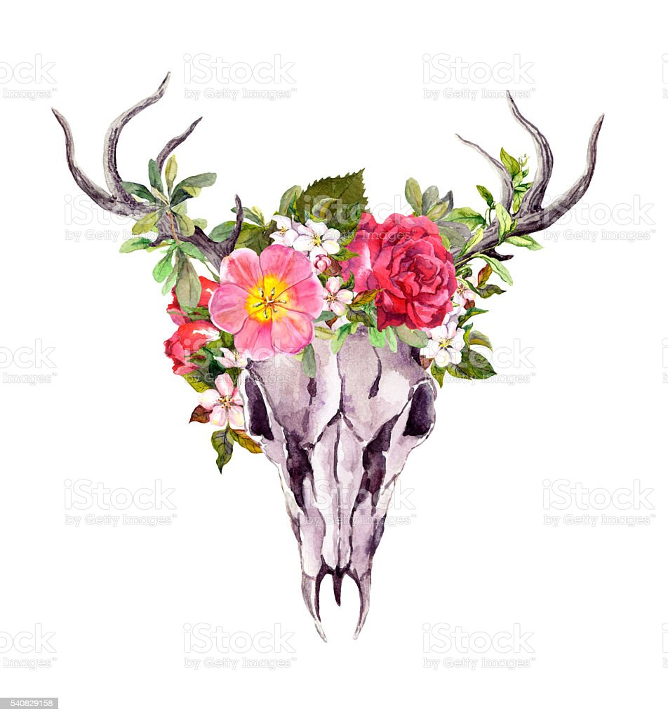 Deer animal skull with flowers. Watercolor vector art illustration