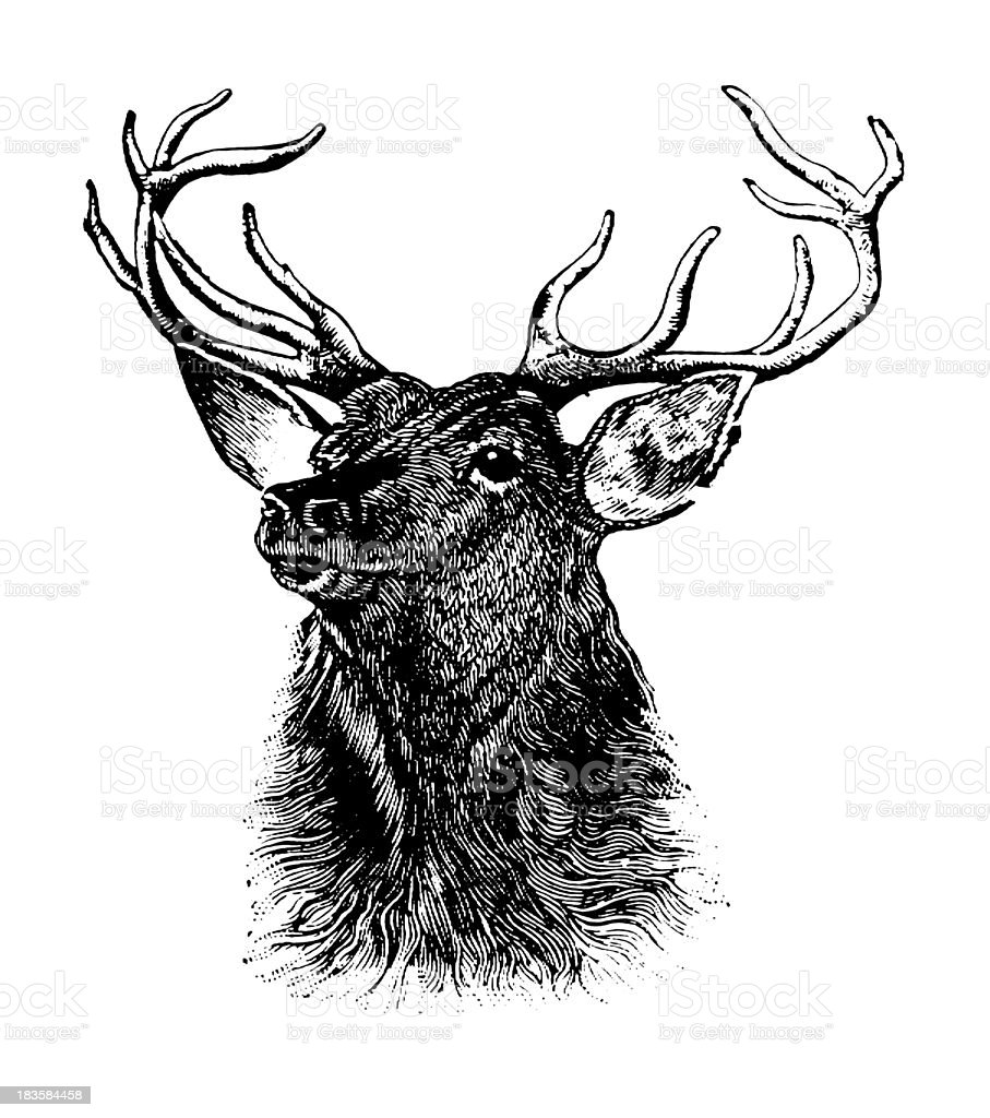 Deer | Early Woodblock Illustrations royalty-free deer early woodblock illustrations stock vector art & more images of 19th century