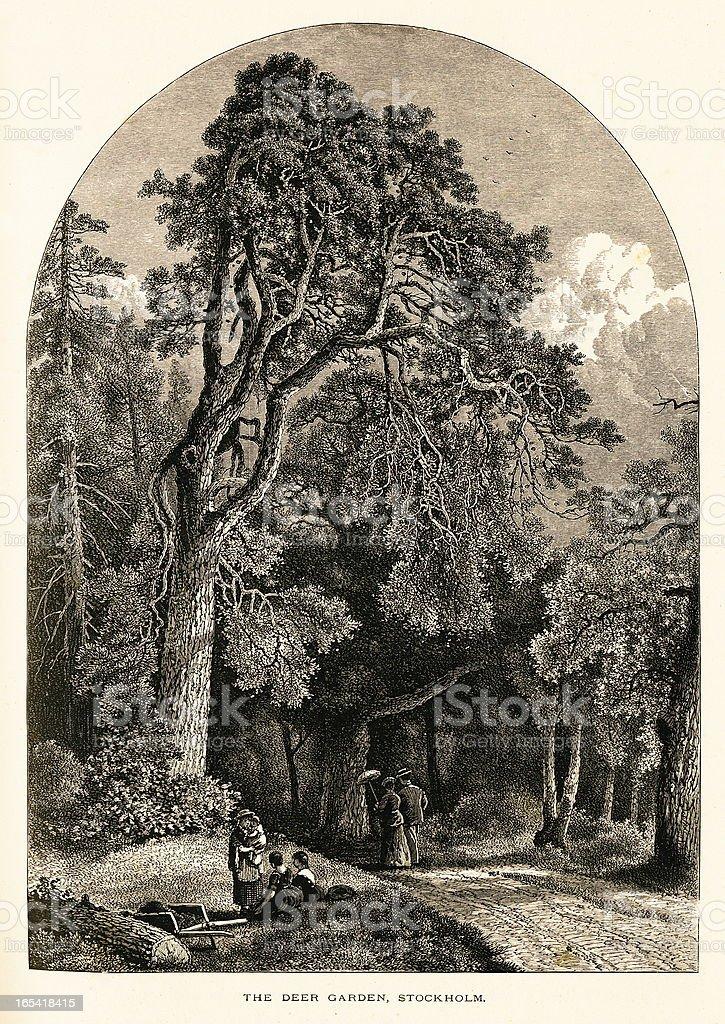Deer Garden, Sweden (antique wood engraving) royalty-free stock vector art