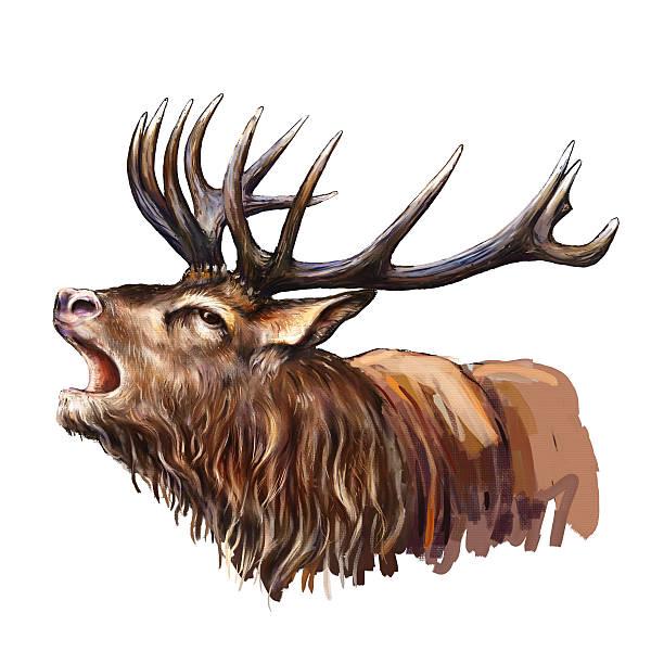 deer head deer head digital painting rutting stock illustrations