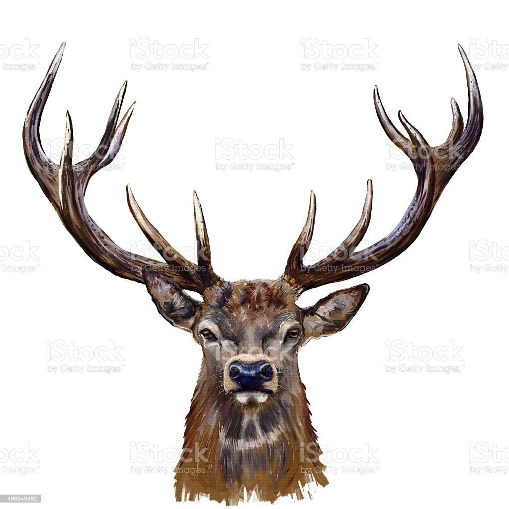 deer head in front vector art illustration