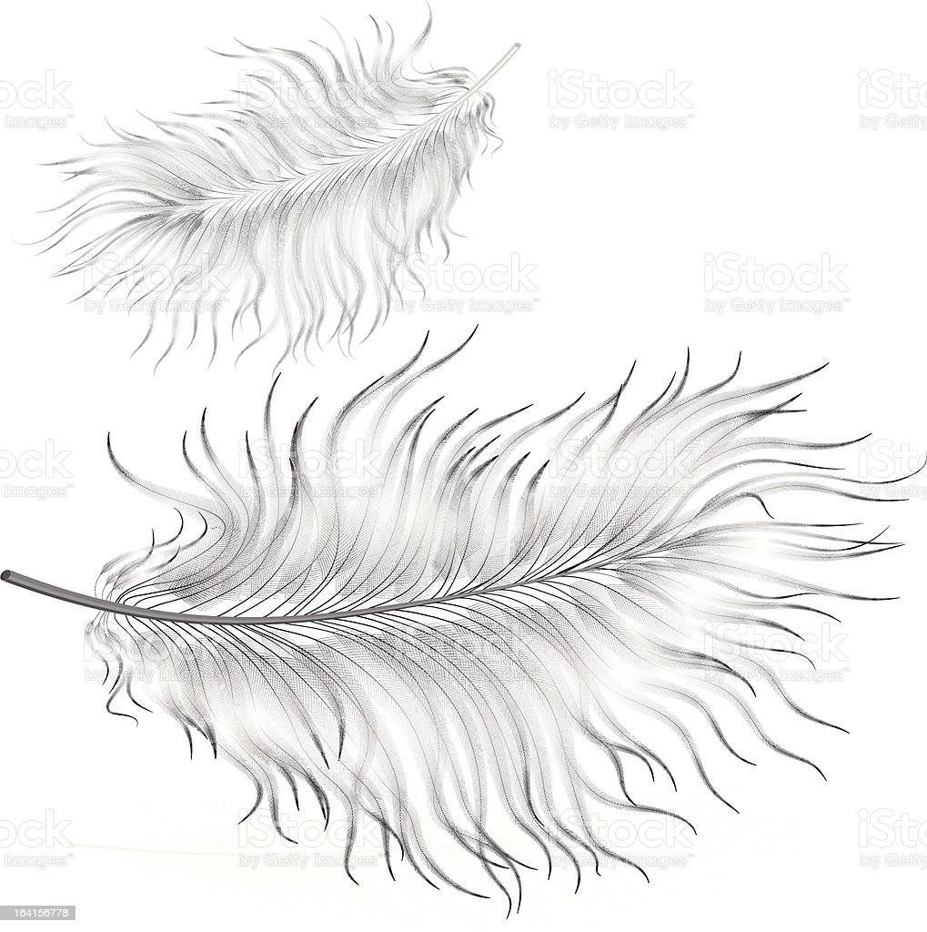 Delicate Feather royalty-free delicate feather stock vector art & more images of affectionate