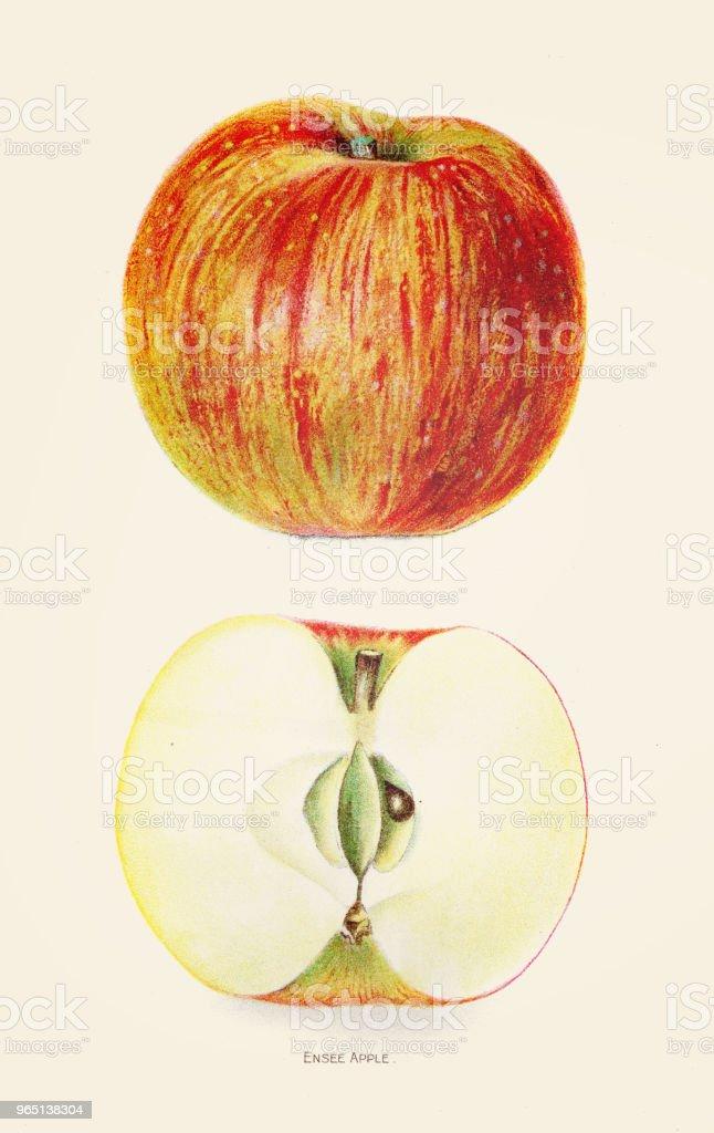 Delicious apple illustration 1892 delicious apple illustration 1892 - stockowe grafiki wektorowe i więcej obrazów antyczny royalty-free