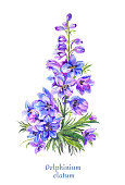 Blue watercolor delphinium, bright floral illustration