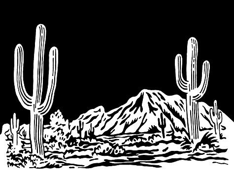 Desert Scene at Night