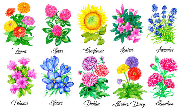Design set of Clover, Sunflower, Lavender, Petunia, Crocus, Dahlia and other flowers isolated on white. vector art illustration