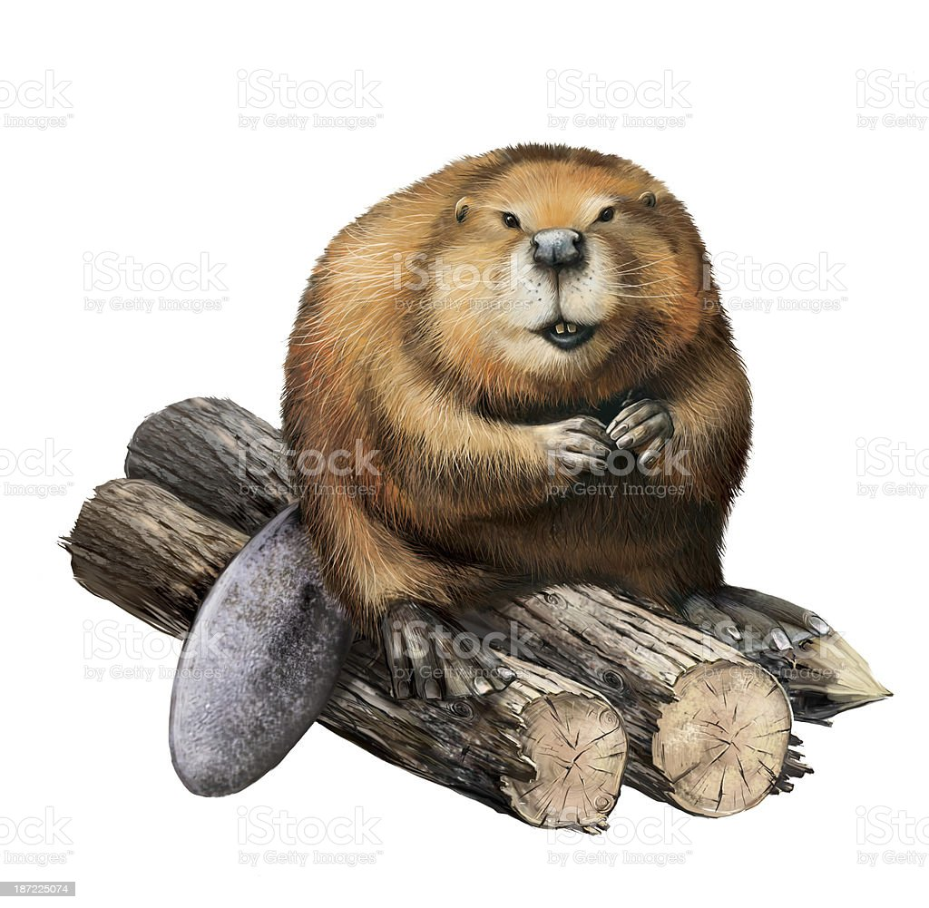 Detailed pencil drawing of a beaver sitting on logs vector art illustration