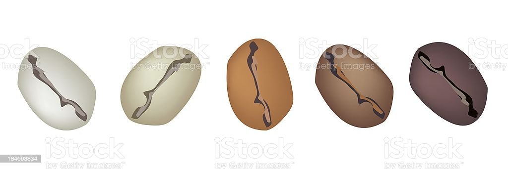 Different Colors of Coffee Beans in A Row royalty-free stock vector art