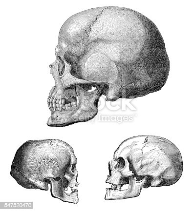 Steel engraving different skulls UP : Skull of Grenelle
