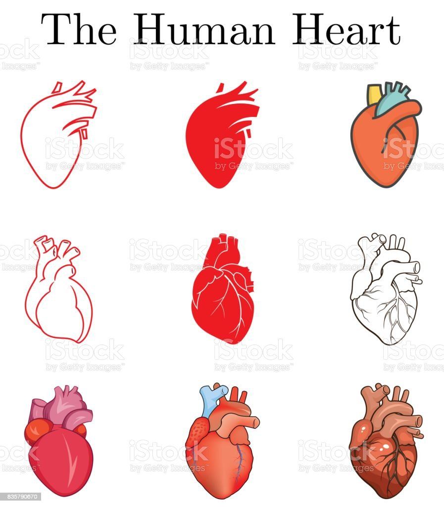 Different illustrations for human heart. Simple images for human heart drawing. Outline and colored versions. vector art illustration