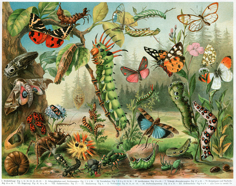 Different insects bugs and butterflies from all around the world