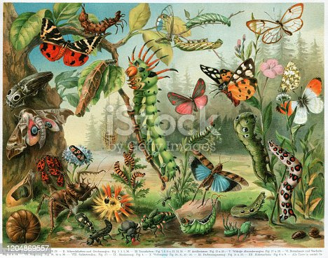 istock Different insects bugs and butterflies from all around the world 1204869557