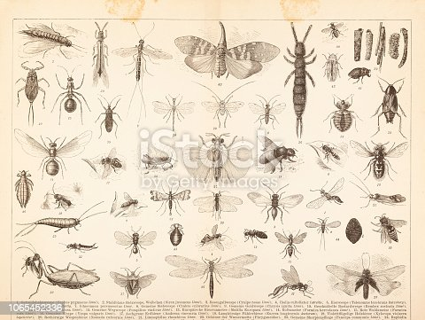 Steel engraving different insects mantis ants wasp Original edition from my own archives Source : Brockhaus Conversationslexikon 1884