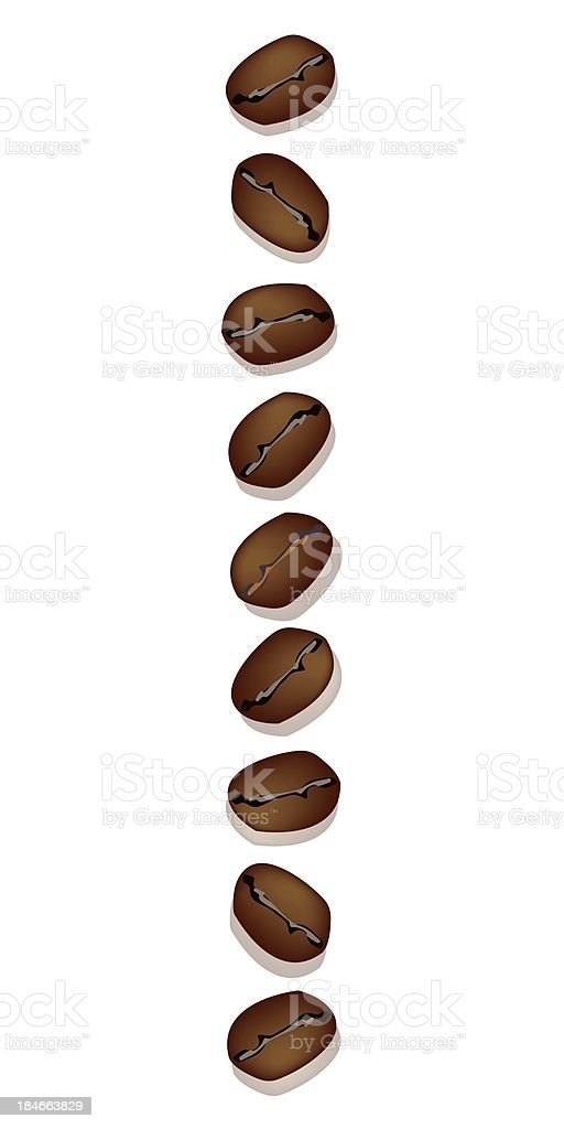 Different Kind of Coffee Beans in A Vertical Row royalty-free stock vector art