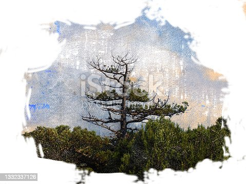 istock Digital generated watercolor painting. A lone pine tree on a mou 1332337126
