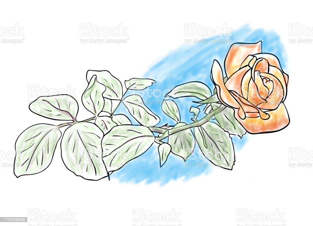 Illustration Numérique Croquis De Couleur De Fleur Rose