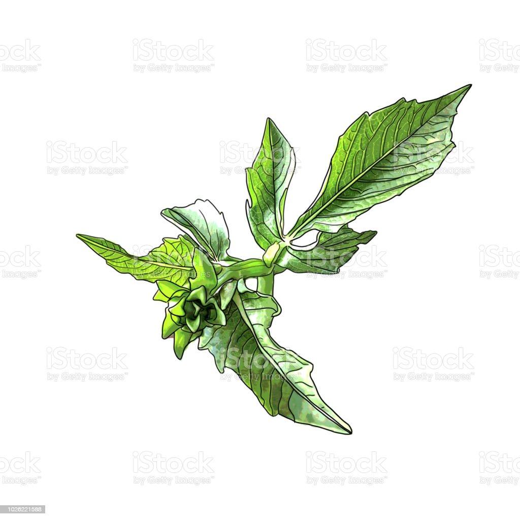 Digital illustration of dahlia flower leaves stock vector art more digital illustration of dahlia flower leaves royalty free digital illustration of dahlia flower leaves stock izmirmasajfo