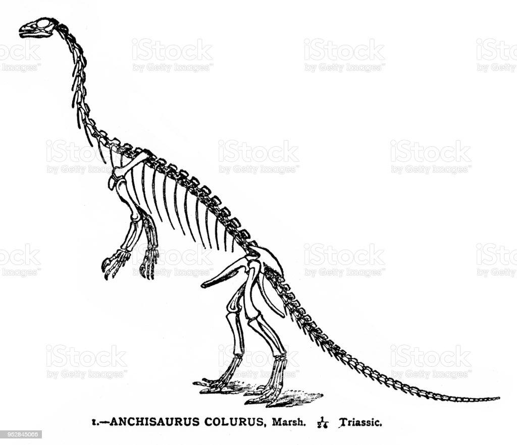 Ilustración de Esqueleto Del Dinosaurio Grabado 1894 y más banco de ...