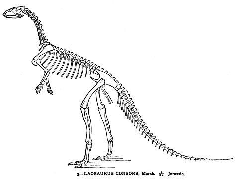 dinosaur skeleton engraving 1894 stock illustration