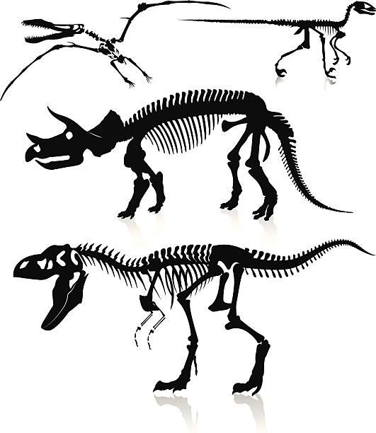 dinosaurs and fossils - animal bone stock illustrations