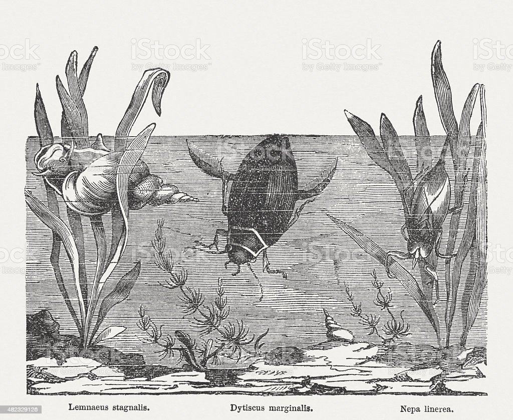 Diving animals, published in 1868 vector art illustration
