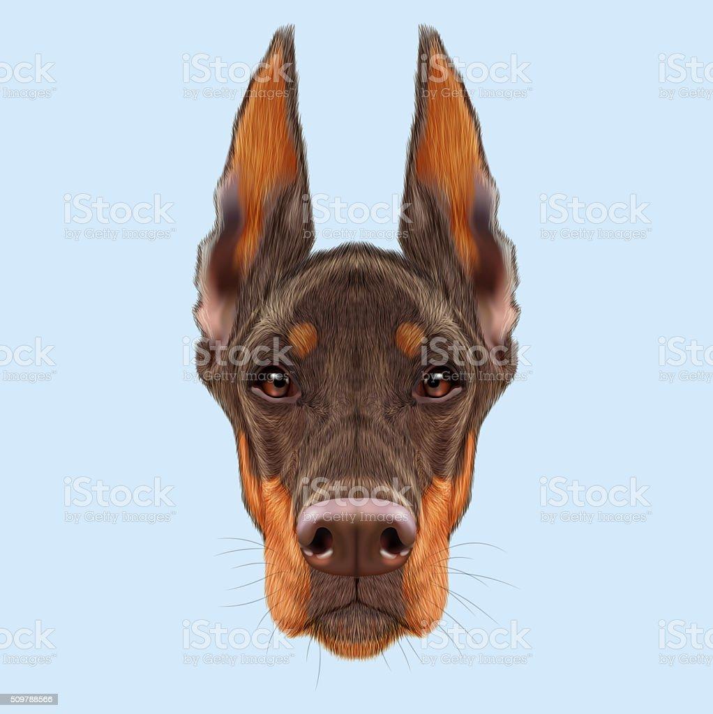 Doberman Pinscher Dog Stock Illustration Download Image Now Istock