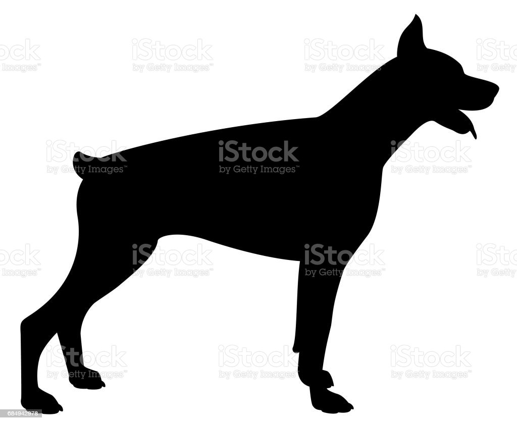 dobermann vector dog silhouette royalty free stock vector art