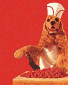 istock Dog Butcher Wearing Hat 187483773