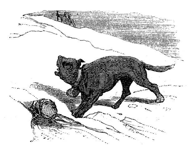 Best Dog Digging Illustrations, Royalty-Free Vector ...