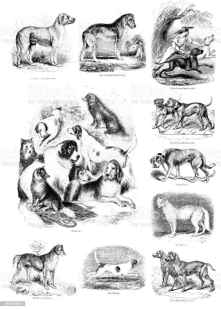 Perro e ilustraciones - ilustración de arte vectorial