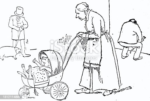 istock Dog is taken for a walk in a stroller 1312114887